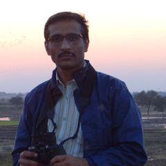 ManishBhatt