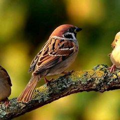 BIRDfriend