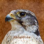 Alkhaldi164
