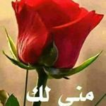العراق9
