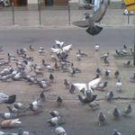 ahmed_sa
