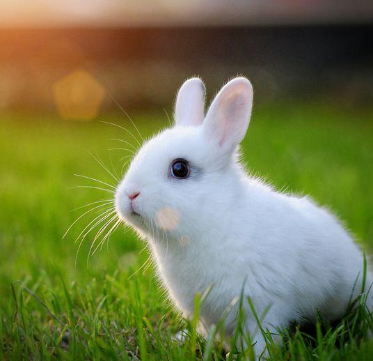 Cute-a-bunny.jpg