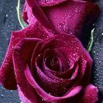 الوردالجوري