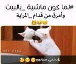 fatimafofe