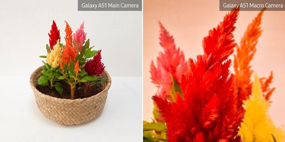 A51-Macro-Lens-Plant_main_3.jpg
