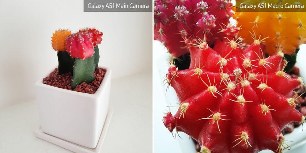 A51-Macro-Lens-Plant_main_4.jpg
