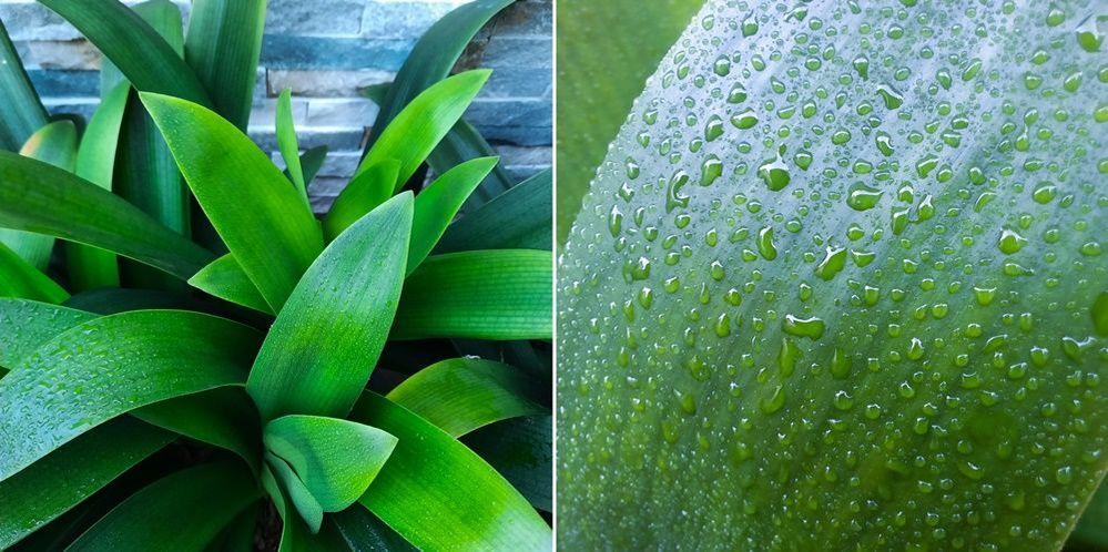 A51-Macro-Lens-Plant_main_5.jpg