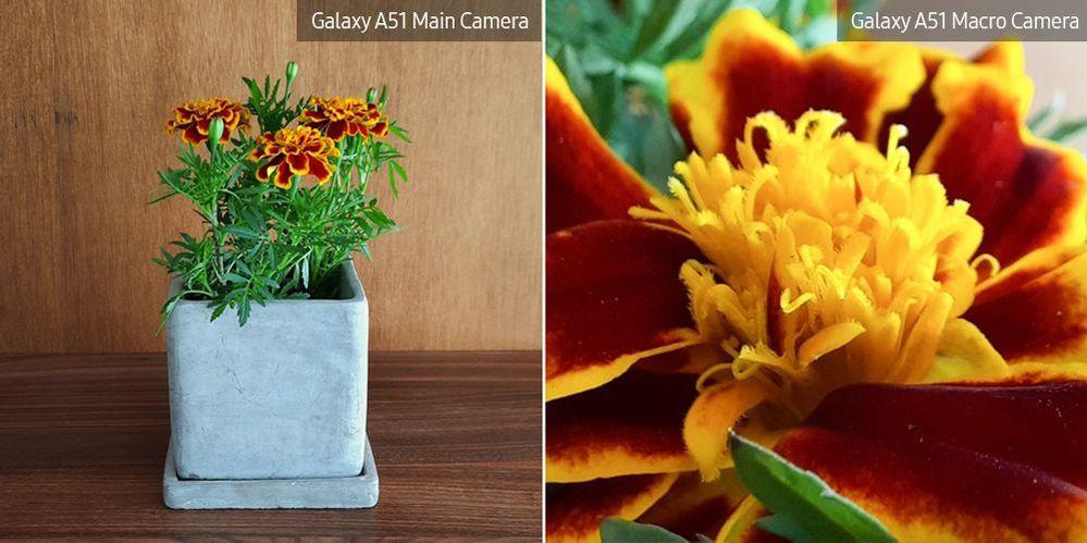A51-Macro-Lens-Plant_main_7.jpg