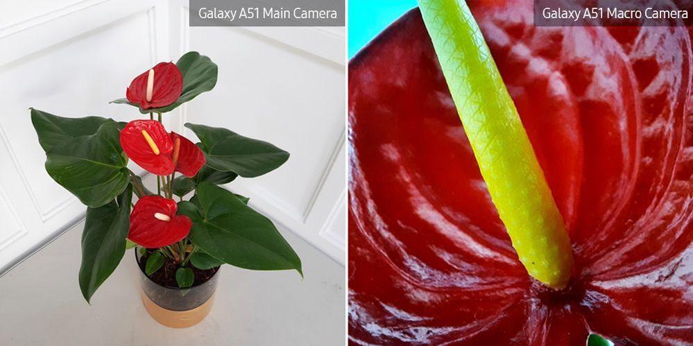 A51-Macro-Lens-Plant_main_9.jpg