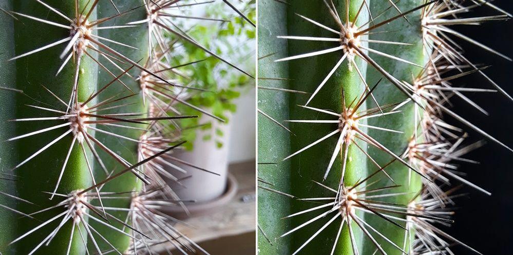 A51-Macro-Lens-Plant_main_10.jpg