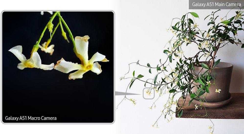 A51-Macro-Lens-Plant_main_12.jpg