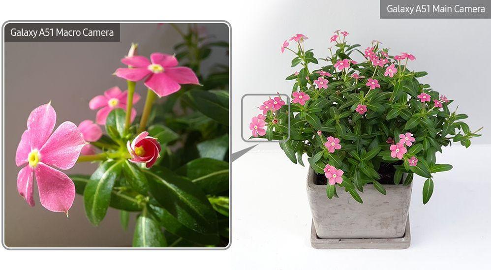 A51-Macro-Lens-Plant_main_13.jpg