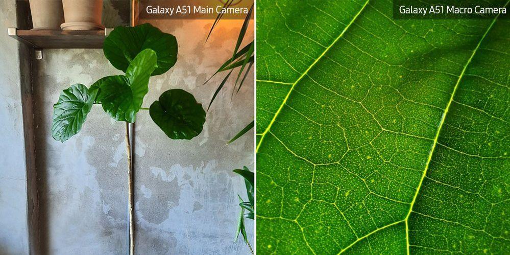A51-Macro-Lens-Plant_main_16.jpg