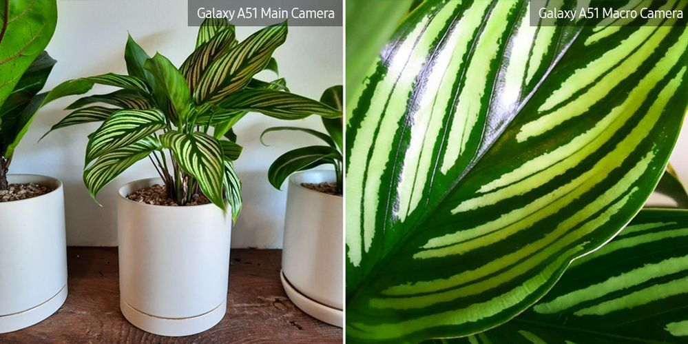 A51-Macro-Lens-Plant_main_17.jpg
