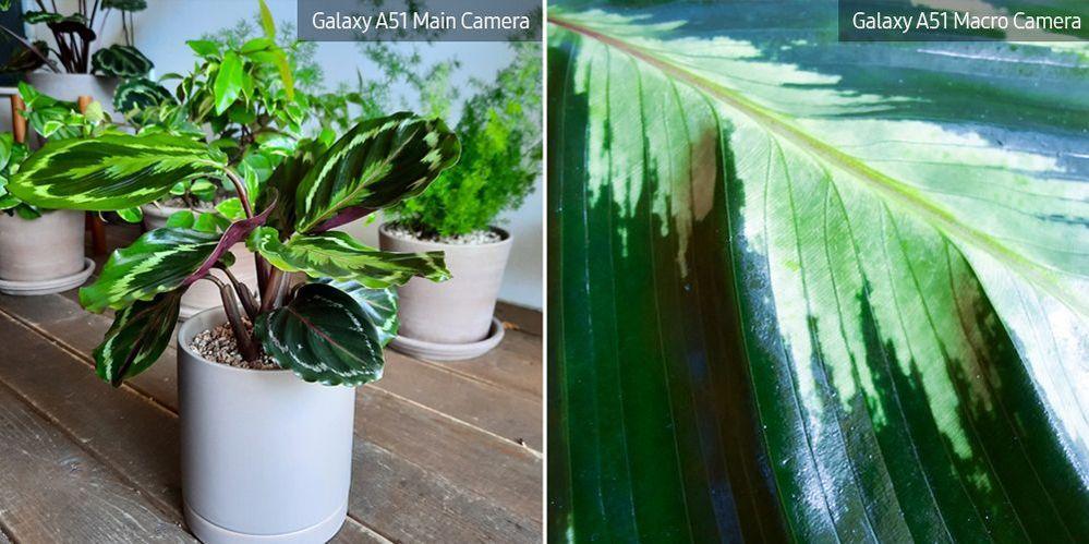 A51-Macro-Lens-Plant_main_19.jpg